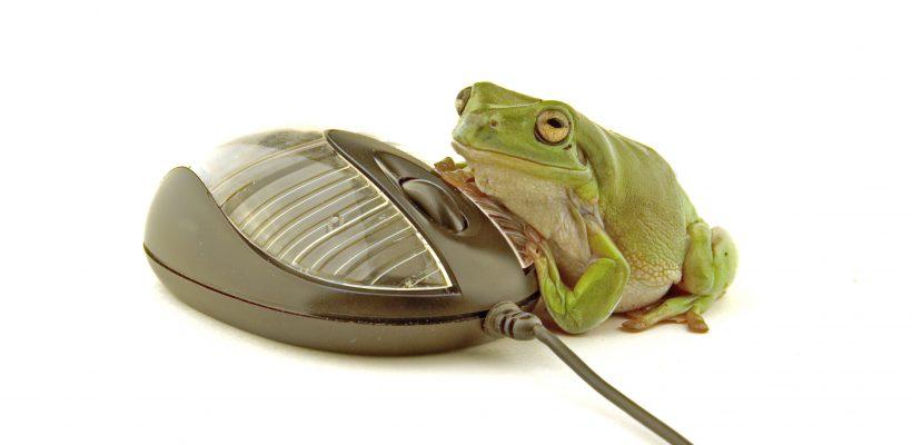 computer frog
